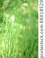 绿色自然背景模糊植物草摘要 66018529