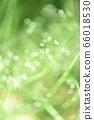 绿色自然背景模糊植物草摘要 66018530