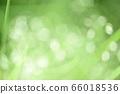绿色自然背景模糊植物草摘要 66018536