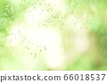 绿色自然背景模糊植物草摘要 66018537