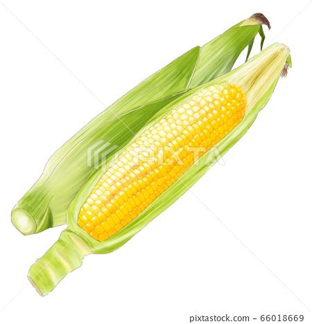 corn_watercolor 66018669