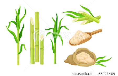 Sugar Cane Unbranched Stems with Leaves and Superfood like Brown Granulated Sugar Vector Set 66021469