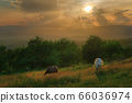 Horses in the Carpathian Mountains of Romania 66036974