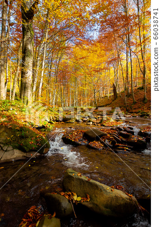 Mountain river in autumn forest. autumn landscape. 66038741