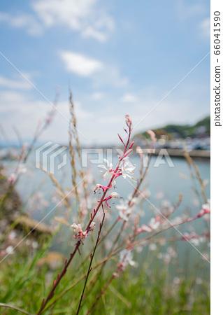 Coastal flowers 66041590
