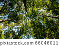Lush tree tropical forest against sky at Phu Kradueng 66046011