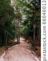 Pine tree forest and nature trail road at Phu Kradueng 66046013