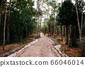Pine tree forest and nature trail road at Phu Kradueng 66046014