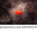 Red Autumn leaf on dark coloured stone surface 66046016