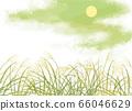 月亮和日本蒲苇的矢量图 66046629