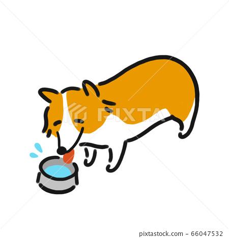 Corgi drinking water illustration 66047532