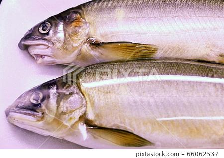 保鮮膜包住的兩條魚 66062537