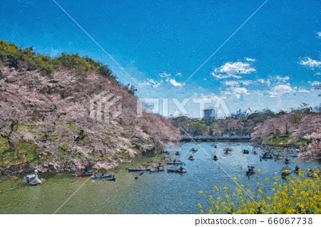 Cherry blossoms at Chidorigafuchi 66067738