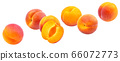 Apricots isolated on white background with clipping path 66072773