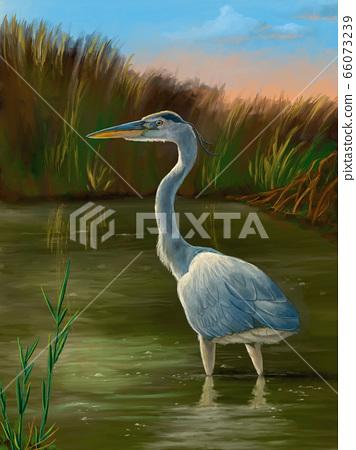 Wetland birds, blue heron 66073239