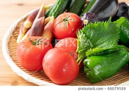 夏季蔬菜拼盤 66079589