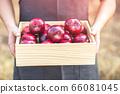Organic fresh apples are non-toxic   66081045