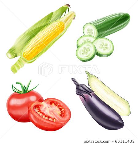 玉米 玉蜀黍 茄子 66111435