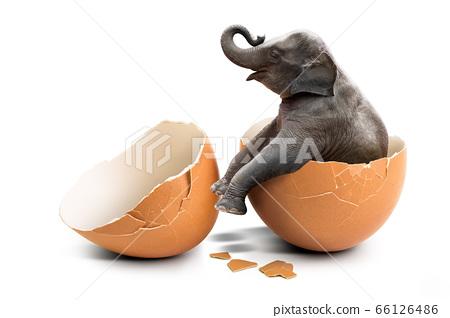 Elephant in eggshell 66126486