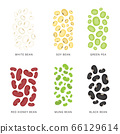 Set of Beans and nuts. Organic and healthy food Vector illustration. 66129614
