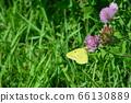 Monch Butterfly(三内丸山遗址/青森县青森市三内丸山) 66130889
