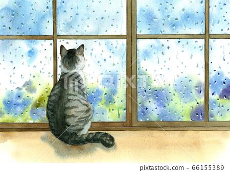 Cat watching raindrops hanging through the window 66155389