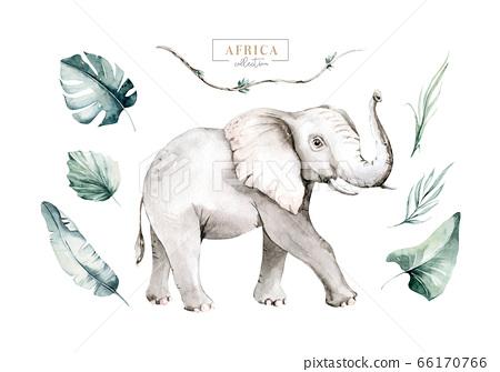 Watercolor African elephant animal isolated on white background. Savannah wildlife cartoon zoo safari poster. Jungle decoration 66170766