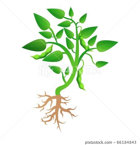 Soybean plant grow up icon, cartoon style 66184843