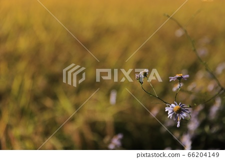 들꽃 66204149