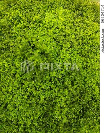 식물 연두색 66204714