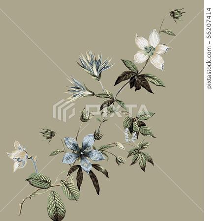 美麗的水彩玫瑰花和牡丹花 66207414