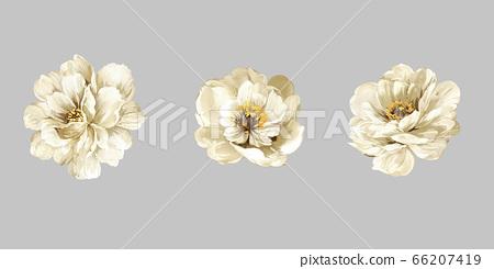 美麗的水彩玫瑰花和牡丹花 66207419