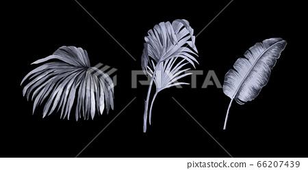 美麗的水彩玫瑰花和牡丹花 66207439