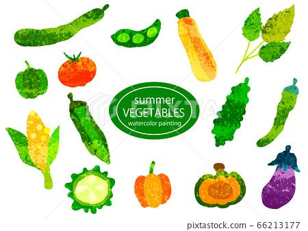水彩紋理手繪蔬菜集 66213177