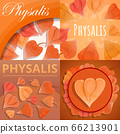 Physalis fruit banner set, cartoon style 66213901