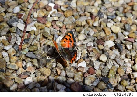 Benifid Butterfly 66224599