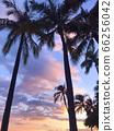 棕櫚樹的輪廓和透明的日落 66256042
