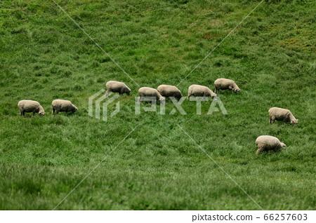 Sheep Ranch, Blue Grassland, Daegwallyeong, Landscape, Travel 66257603
