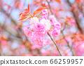 """일본식 이미지 """"겹"""" 66259957"""