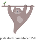 Cute sloth on the branch of tree smiling. 66276150
