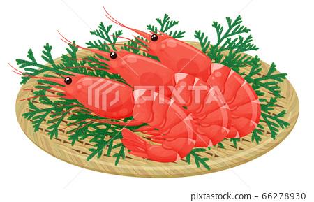 蝦放在竹漏勺裡的插圖_紅蝦_hiba_hinoki asunaro 66278930