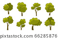 Collection of green summer trees. 66285876