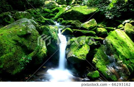 이끼계곡,,청류,폭포,신록,초록색 66293162