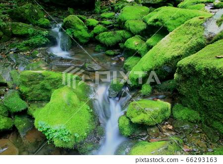 이끼계곡,,청류,폭포,신록,초록색 66293163