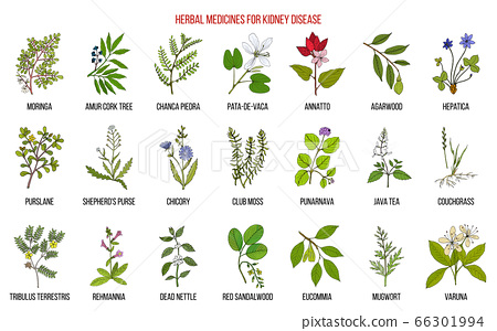 Best herbs for kidney disease 66301994