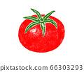 蕃茄的例證 66303293