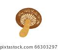 香菇的插圖 66303297