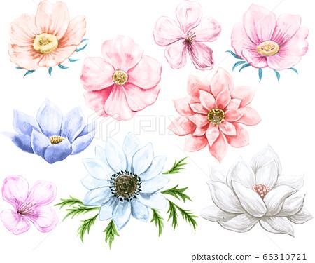꽃의 수채화 그림 소재 66310721