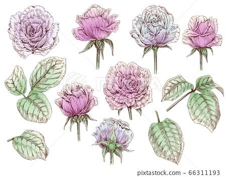 손으로 그린 장미 꽃과 잎 선화 소재집 66311193