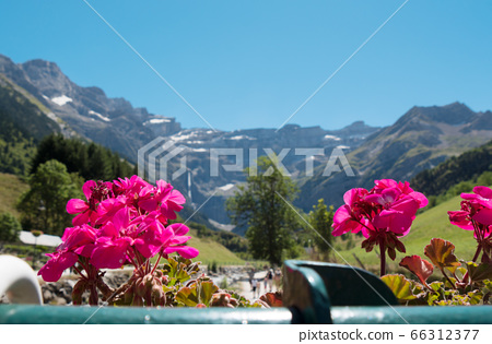 view of Cirque de Gavarnie with flowers in the 66312377
